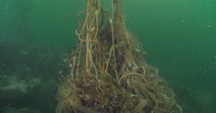 Ocean scenery surge and poor visibility, in kelp forest, 4K UltraHD, UP33915 Stock Footage