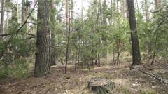 Pine wood Dollyshot Stock Footage