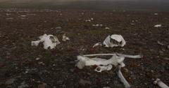 Walrus bones dolly on foggy arctic island Stock Footage