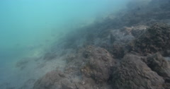 Ocean scenery juvenile herbivores in the protected shallows, on river mouth rock Stock Footage