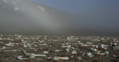 Field of bleached walrus bones below fog shrouded mountains Stock Footage
