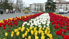 Blooming Tulips on the Square Stock Footage