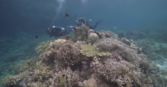 Ocean scenery pair of divers explore small bommie in protected shallow coral Stock Footage