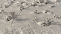 Ermine Weasel Track in Snow in Yellowstone National Park Stock Footage