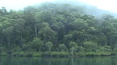 Australia Rain-forest Eucalyptus Coastal Forest in Misty Fog Stock Footage