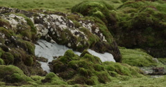 Pan from moss covered rocks to wet bog Stock Footage