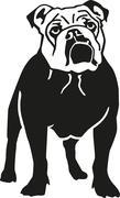 English bulldog Stock Illustration
