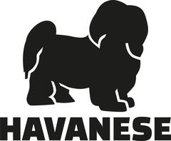 Havanese with breed name - stock illustration