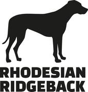 Rhodesian ridgeback with breed name - stock illustration