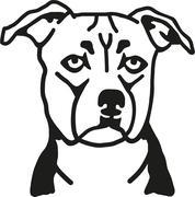Staffordshire Bull Terrier head - stock illustration