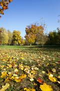 Fallen leaves of trees in the park Stock Photos