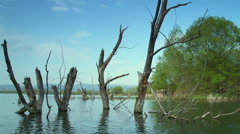 Movement around dead trees in lake Stock Footage