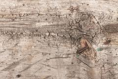 Texture of old wood with a rusty nail - stock photo