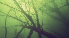 Underwater forest of huge silhouettes of trees and branches Stock Footage