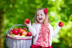Stock Photo of Little girl picking apples in fruit orchard