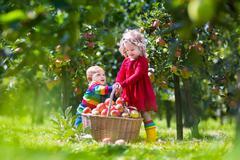 Kids playing in apple tree garden Stock Photos