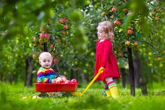 Kids playing in apple tree garden - stock photo