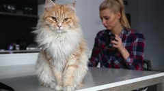 Ginger cat is sitting on table. Girl is drinking coffee in the background Stock Footage