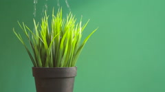 grass irrigation process on a green background - stock footage