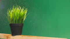 Grass irrigation process on a green background Stock Footage