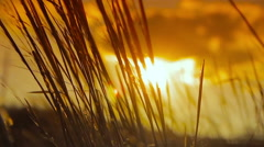 Spikelets at sunset background Stock Footage