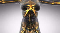 Science anatomy of human body in x-ray with glow skeleton bones on white Stock Footage
