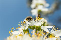On a sunny day the bee drinks nectar from a flower Stock Photos