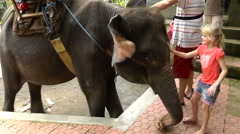 Girl touching the elephant Stock Footage