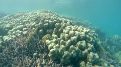 Coral reef, Red sea, Marsa Alam, Abu Dabab, Egypt Stock Footage