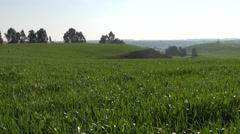 Cereal Cultivated Hill on a Sunny Spring Day - stock footage