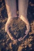 Farmer holding pile of arable soil Stock Photos