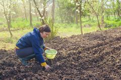 Woman seeding onions in organic vegetable garden - stock photo