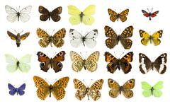 Collage different butterfly species Stock Photos
