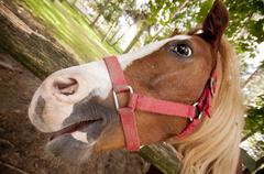Funny horse close up, wide angle lens. Stock Photos