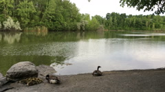 Calm Nature Background Stock Footage