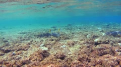 School of fish swim over the top of a coral reef Stock Footage
