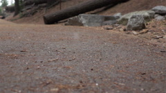 SLOW MOTION: Hail falling in sequoia national forest park - stock footage