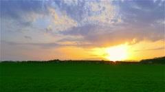 Field of green sprouting wheat at sunset Stock Footage