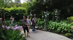 Asian tourists visit National Orchid Gardens in Singapore, Singapore. Stock Footage