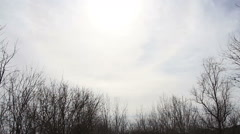 Smooth Slider Dolly Shot of Beautiful Winter Forest Scenery Stock Footage