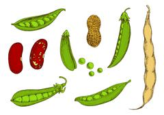 Peanut, sweet green peas and beans sketch Stock Illustration