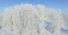 Aerial: morning in a winter forest.. Frozen Birch tree with frost at winter - stock footage