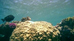 The life of a coral reef, Red sea, Marsa Alam, Abu Dabab, Egypt Stock Footage