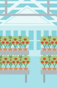 Background of tomatoes in the greenhouse Stock Illustration