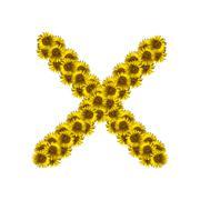Isolated sunflower alphabet X Stock Photos