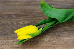 Beautiful Yellow tulips on Wood Background - stock photo