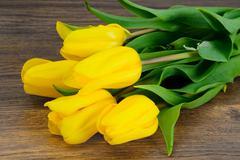 Beautiful Yellow tulips on Wood Background - stock photo