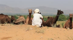 Indian men and herd camels attended the annual Pushkar Camel Mela. India Stock Footage