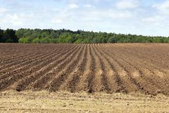 plowed land, furrows - stock photo