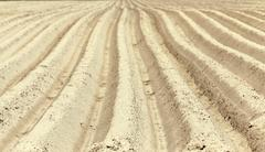 furrow on the field - stock photo